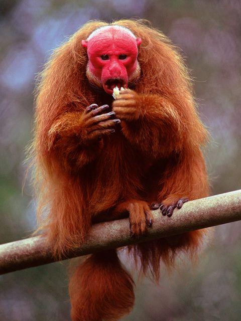 Los Animales Más Raros En Fotos
