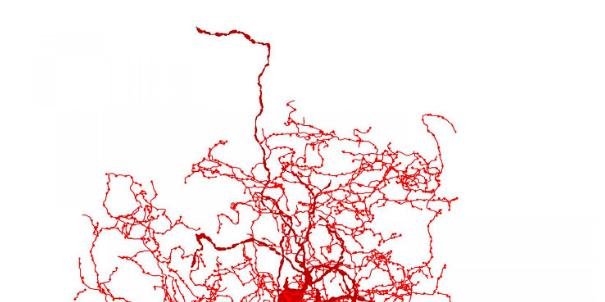 Descubren una nueva clase de neurona