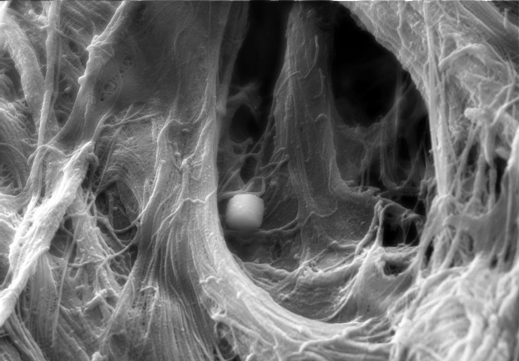 Un anticancerígeno que propicia la regeneración del tejido cardíaco