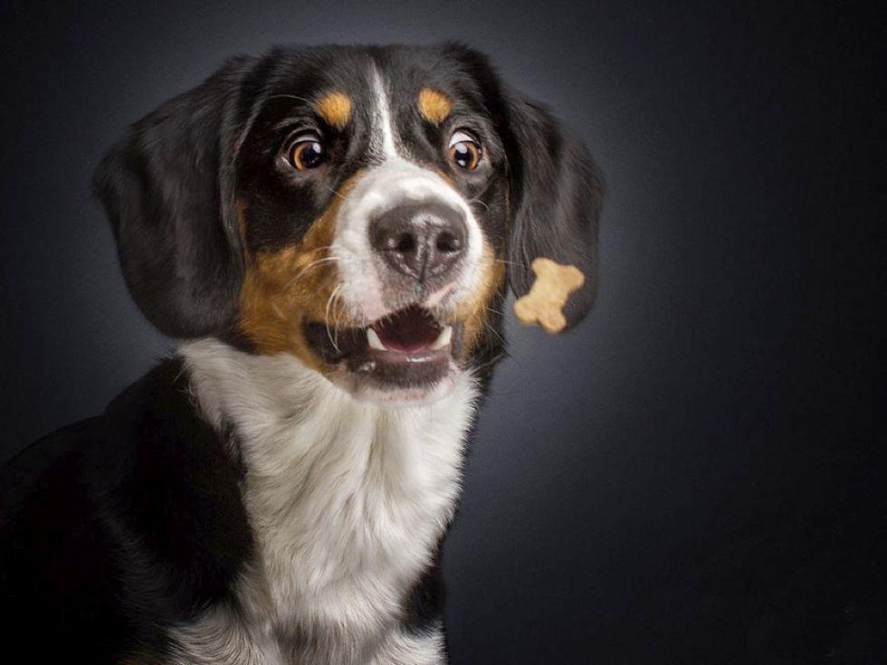 Tu fotografia del dia - Página 3 Wbfunny-dogs-catching-food-fotos-frei-schnauze-christian-vieler-2