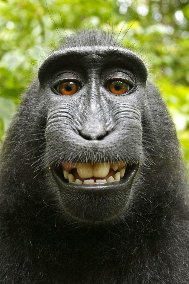 eca142b4735a0 Animales divertidos macaco quo jpg 480x720 Una cara de mono