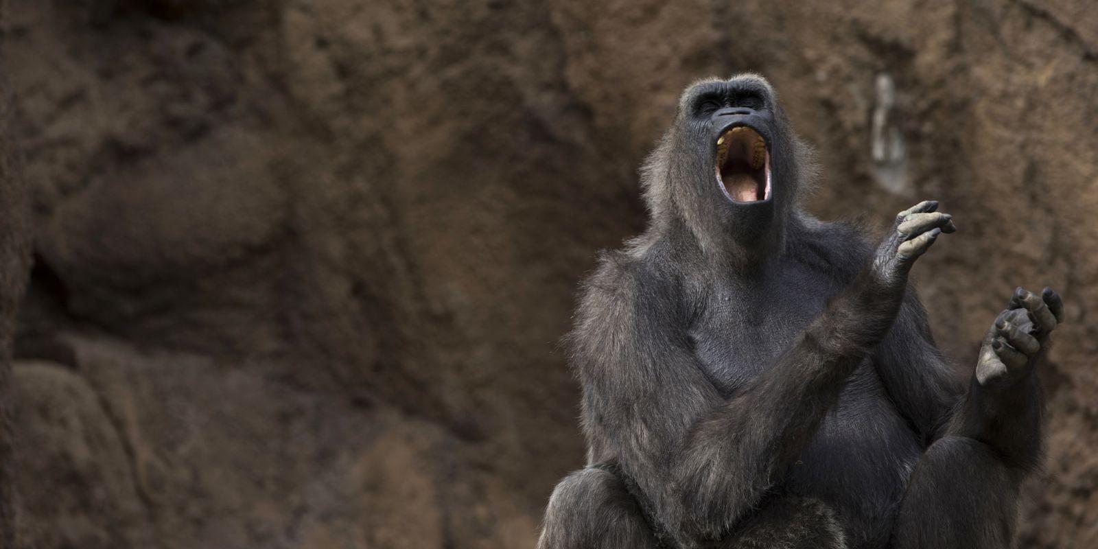 ¿Podrían los primates aprender a hablar?