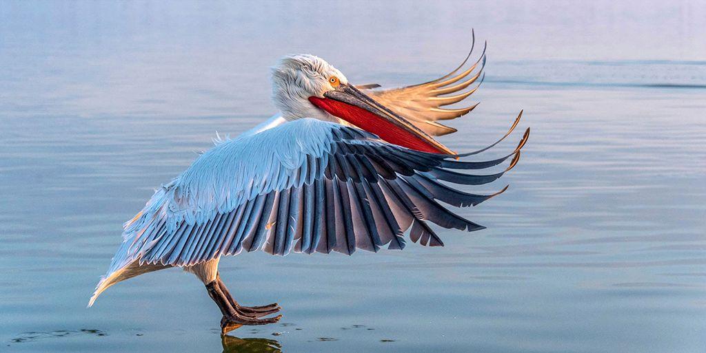 Premios Audubon: las 9 imágenes de aves más bellas e impactantes