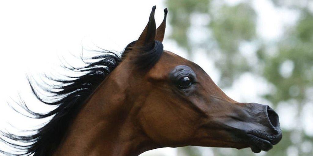 Crean un caballo que es idéntico a un personaje de Disney