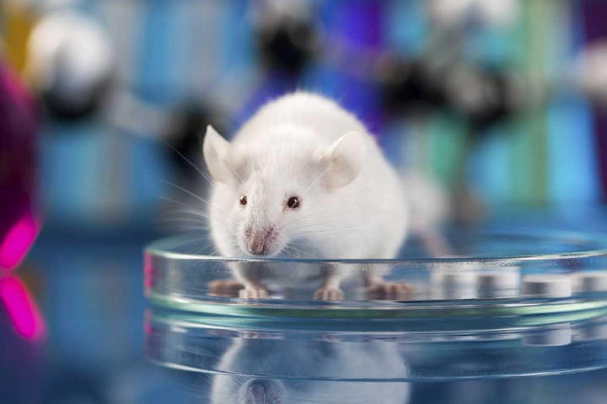Logran curar el cáncer de colon en ratones