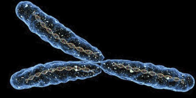 ¿Es el cromosoma Y culpable de que los hombres vivan menos?