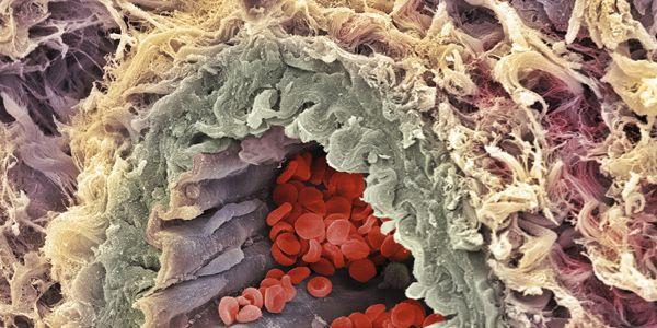 El cuerpo humano: Sangre