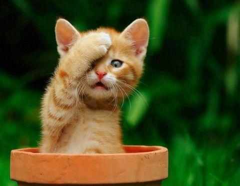 Resultado de imagen para fotos de gatitos