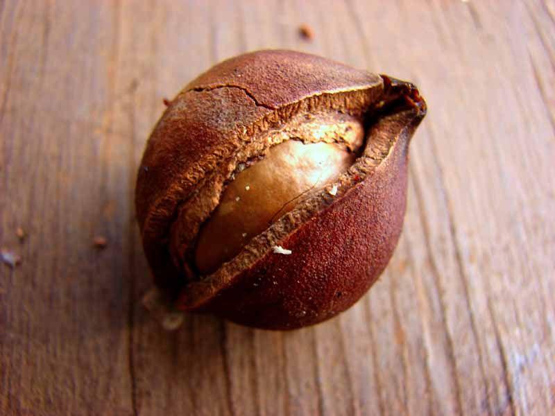 significado de nueces de macadamia