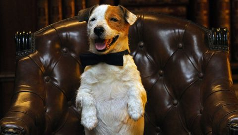 Brown, Dog breed, Vertebrate, Carnivore, Dog, Snout, Tan, Liver, Terrestrial animal, Leather,