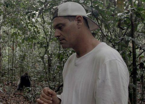 Adaptation, Jungle, Tree, Forest,