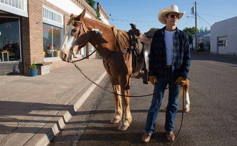 Horse, Halter, Rein, Horse supplies, Pack animal, Bridle, Horse tack, Mare, Stallion, Working animal,
