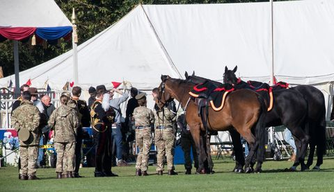 Horse, Rein, Bridle, Stallion, Mare, Military, Army, Horse harness, Livestock, Horse tack,