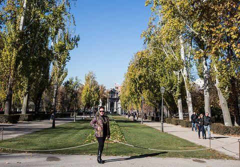 Tree, Yellow, Daytime, Sky, Public space, Woody plant, Autumn, Leaf, Urban area, Street,