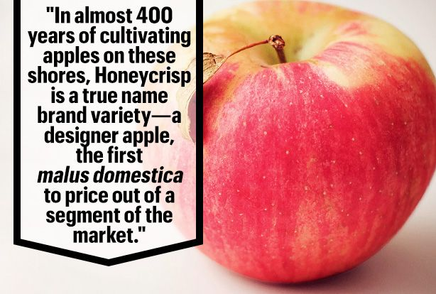 Why Are Honeycrisp Apples So Damn Expensive?