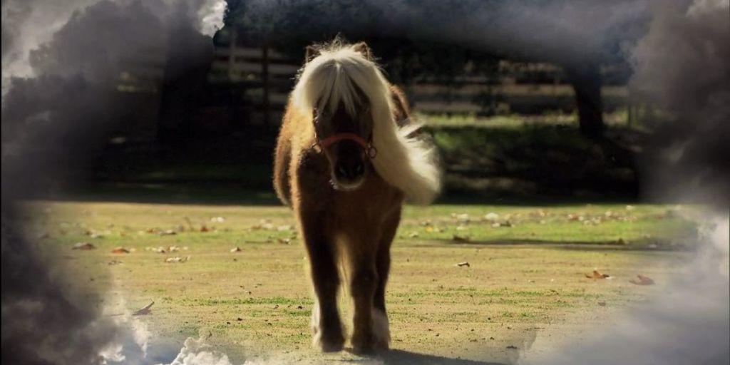 Lil Sebastian Interview - Meet Gideon, the Mini-Horse Actor From ...