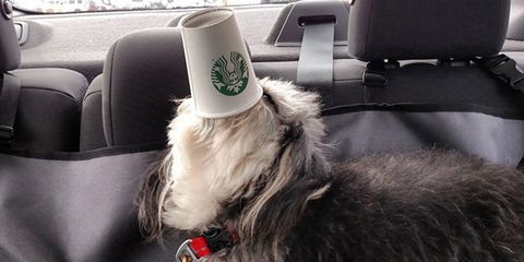 10 Pups Immensely Savoring Their Starbucks Puppuccinos