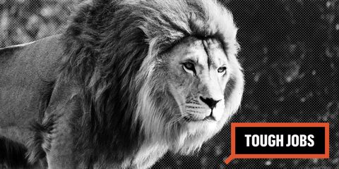 Tough Jobs Lion Tamer
