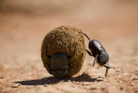 These Are the 25 Toughest Animals on Earth