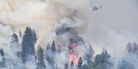 Vegetation, Natural environment, Smoke, Aircraft, Pollution, Atmospheric phenomenon, Woody plant, Forest, Wildfire, Fire,