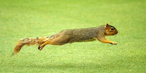 Skin, Organism, Vertebrate, Squirrel, Adaptation, Terrestrial animal, Snout, Wildlife, Tail, Rodent,