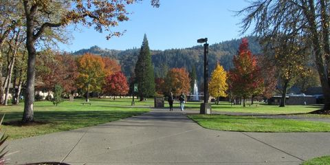 Leaf, Tree, Public space, Deciduous, Woody plant, Park, Street light, Sidewalk, Walkway, Autumn,