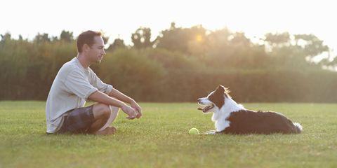 Mammal, Dog breed, Carnivore, People in nature, Dog, Sitting, Sunlight, Working animal, Companion dog, Knee,