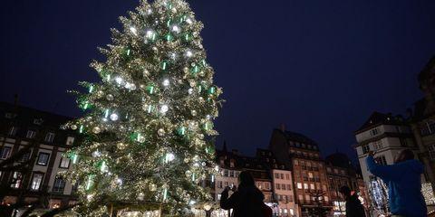 Night, Christmas decoration, Darkness, Woody plant, Light, Holiday, Christmas tree, Midnight, Christmas lights, Evergreen,