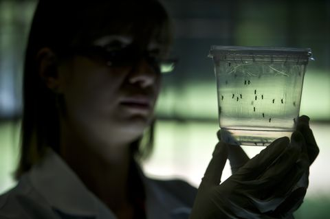 What Exactly Is Zika Virus—and Should You Be Worried?