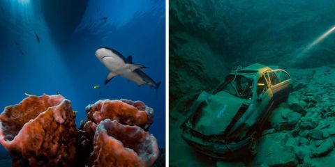 These 15 Mesmerizing Underwater Photos Show What's Really Under the Sea