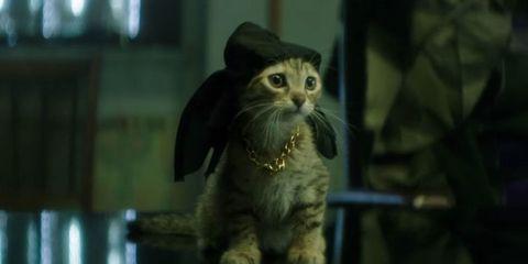 Organism, Felidae, Small to medium-sized cats, Cat, Vertebrate, Whiskers, Carnivore, Iris, Terrestrial animal, Snout,