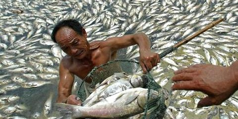 Nothing to See Here, Just 35 Tons of Dead Fish from a Chinese Lake