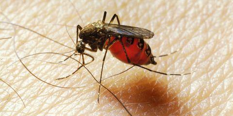 Invertebrate, Insect, Skin, Arthropod, Organism, Pest, Amber, Carmine, Macro photography, Photography,