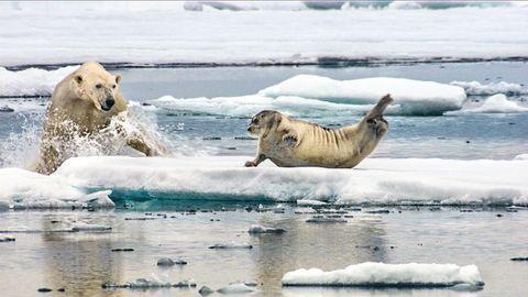 Body of water, Nature, Natural environment, Vertebrate, Fluid, Ocean, Ice, Carnivore, Liquid, Polar ice cap,