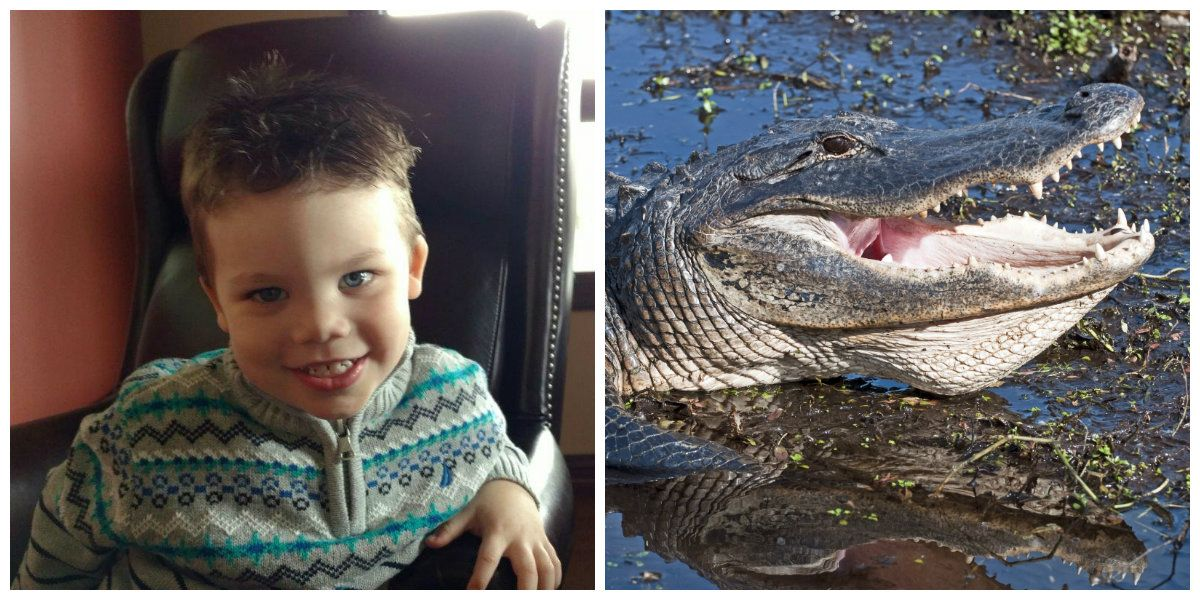 New Details About the Alligator Attack at Disney Reveal There May Have Been a Second Gator