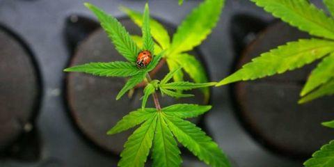 Vegetation, Green, Invertebrate, Leaf, Botany, Insect, Terrestrial plant, Arthropod, Plant stem, Pest,