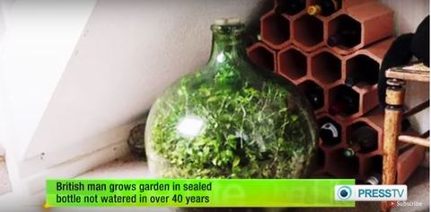 This Incredible Garden in a Bottle Hasn't Been Watered in 44 Years