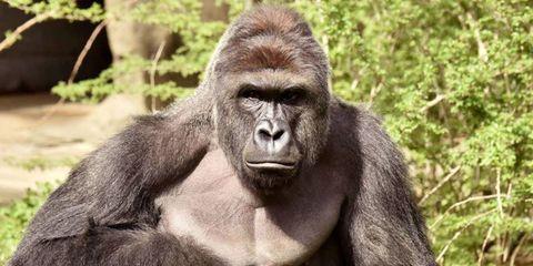 Nature, Organism, Natural environment, Skin, Primate, Shoulder, Vertebrate, Photograph, Joint, Terrestrial animal,