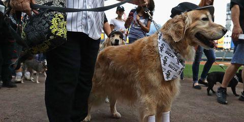 Human, Vertebrate, Dog, Dog breed, Carnivore, Shoe, Mammal, Sporting Group, Collar, Leash,