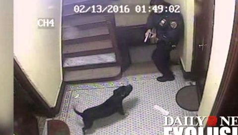 This Graphic Video Shows a Cop Shooting a Beloved Family Dog In An Apartment Building