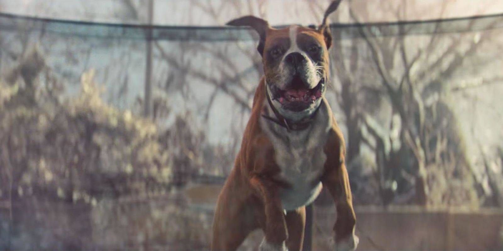 One Dog's Reaction to This Commercial Is the Joy America Needs Right Now