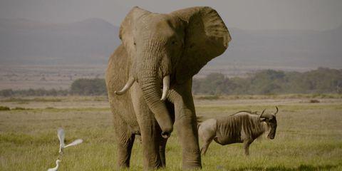 Elephant, Elephants and Mammoths, Organism, Natural environment, Natural landscape, Vertebrate, Skin, Terrestrial animal, Plain, Photograph,
