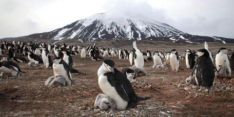 Penguin, Daytime, Natural environment, Bird, Beak, Flightless bird, Adaptation, Ecoregion, Nature reserve, Neck,