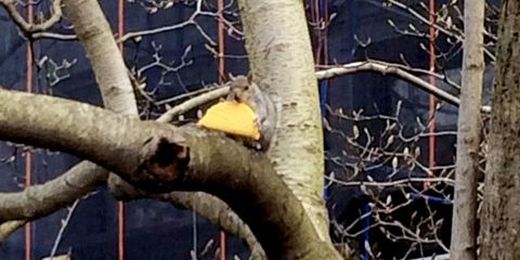Tree, Branch, Plant, Woody plant, Twig, Trunk, Canoe birch, Adaptation, Wildlife, Plant stem,