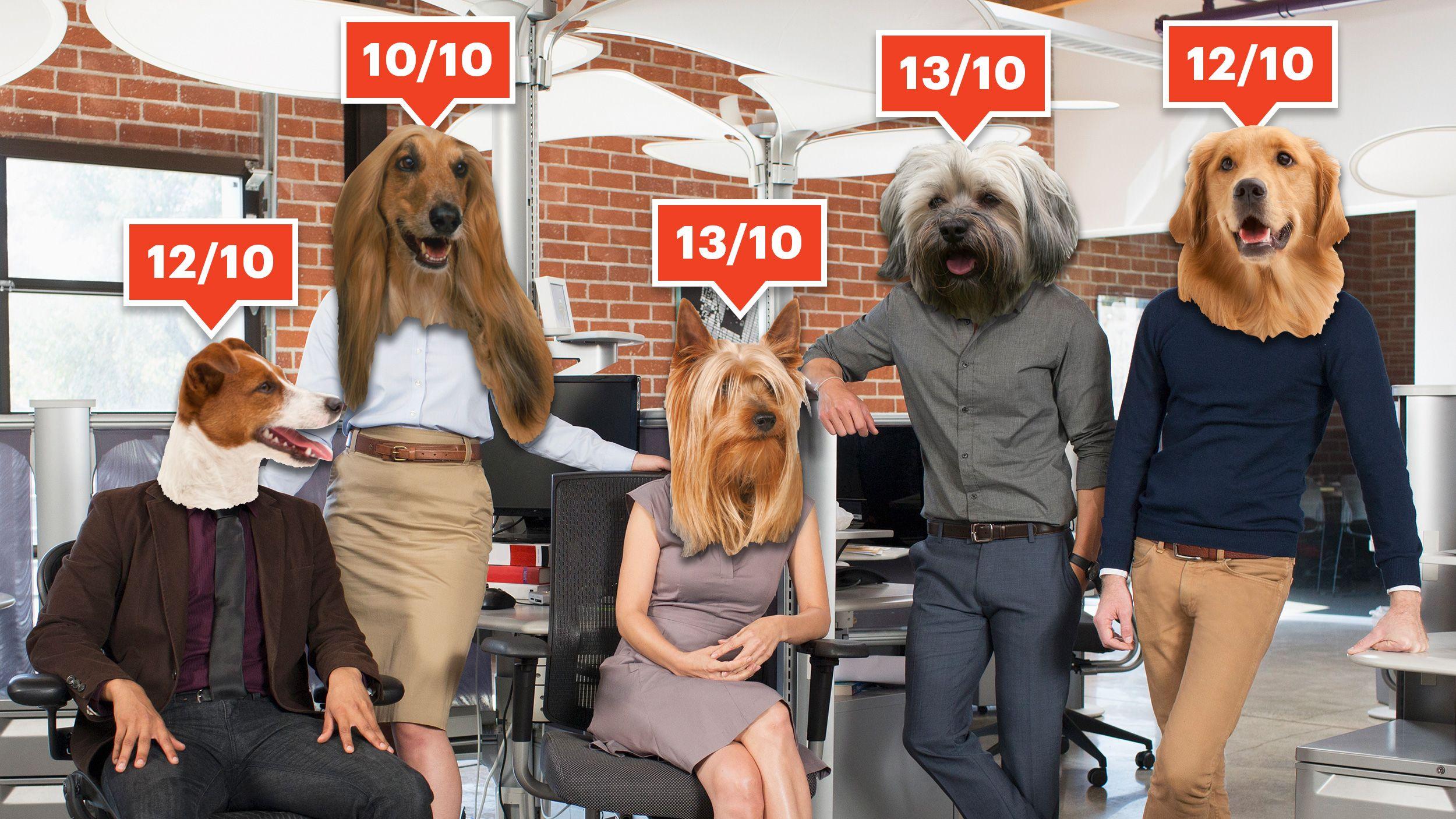7ebb1d1ecf We Rate Dogs' Matt Nelson Turned Joke Twitter Account Into ...