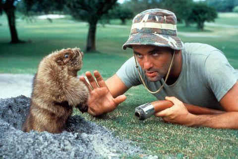 groundhog, brown bear, marmot, adaptation, groundhog day, wildlife biologist, grizzly bear,
