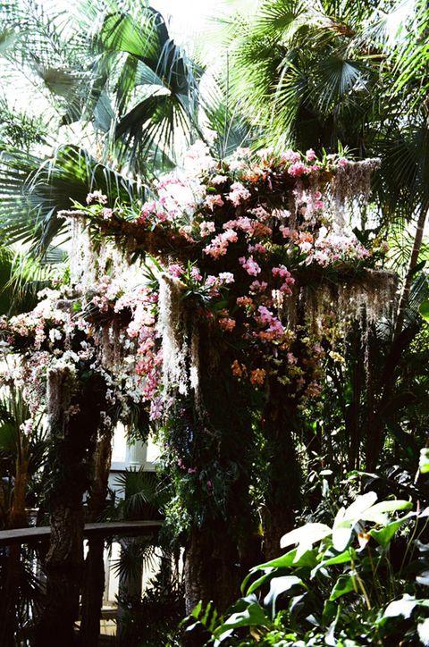 Vegetation, Tree, Plant, Botany, Palm tree, Flower, Arecales, Botanical garden, Woody plant, Garden,