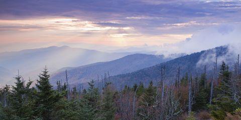 Sky, Cloud, Forest, Wilderness, Cumulus, Spruce-fir forest, Evergreen, Larch, Temperate coniferous forest, Evening,