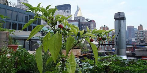 Gramercy Park Hotel Garden Tour Review Of Rooftop
