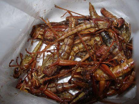 Thai-Fried Grasshoppers